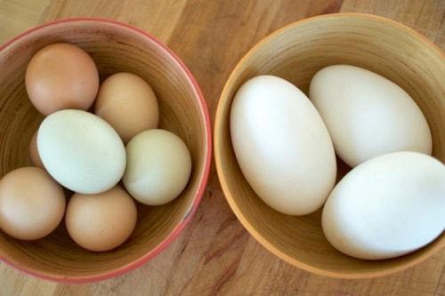 Phụ nữ mang thai có nên ăn trứng ngỗng để con thông minh?