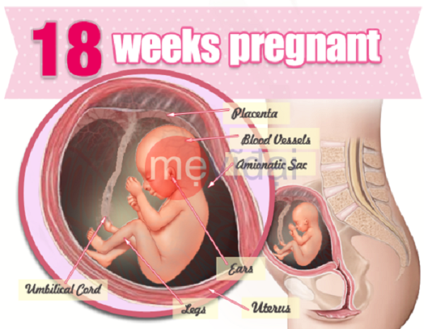 Bà bầu cần chú ý hơn về sức khỏe khi thai nhi vào tuần tuổi 18