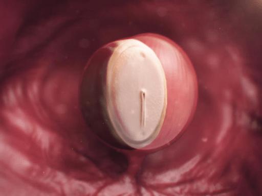 Hình ảnh thai nhi tuần thứ 4